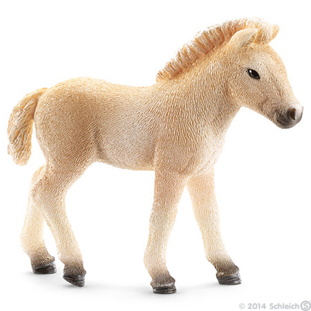 fjord horse foal